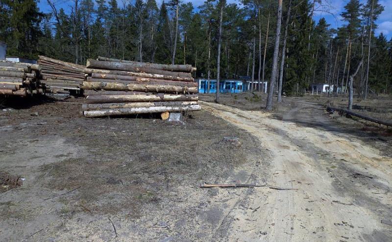 Уголовное дело за незаконную рубку и уничтожение растительности возбудила прокуратура Могилевского района