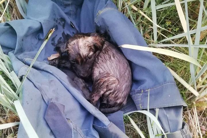 В Волковыске щенок забрел на свадьбу и этим спас себе жизнь