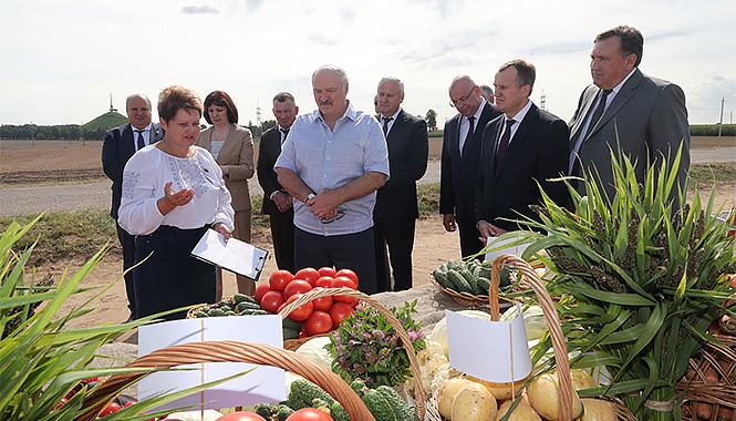 Свой день рождения Александр Лукашенко провел на полях Смолевичского района