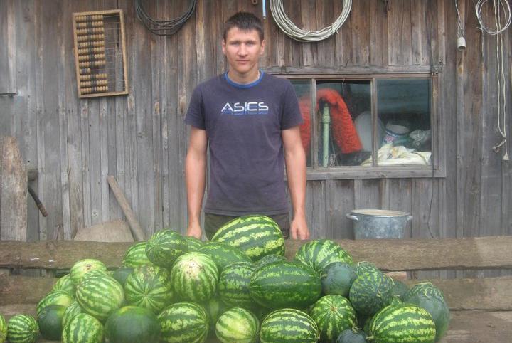 В Могилевской области студент вырастил 60 арбузов, а Вам слабо?