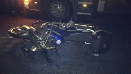 ДТП в Быховском районе: мотоциклист и лось не поделили дорогу