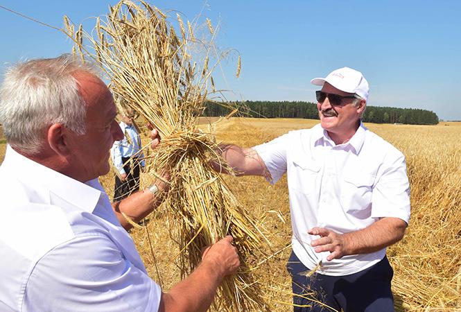 Александр Лукашенко на Могилевщине: «День и ночь надо пахать и сеять»