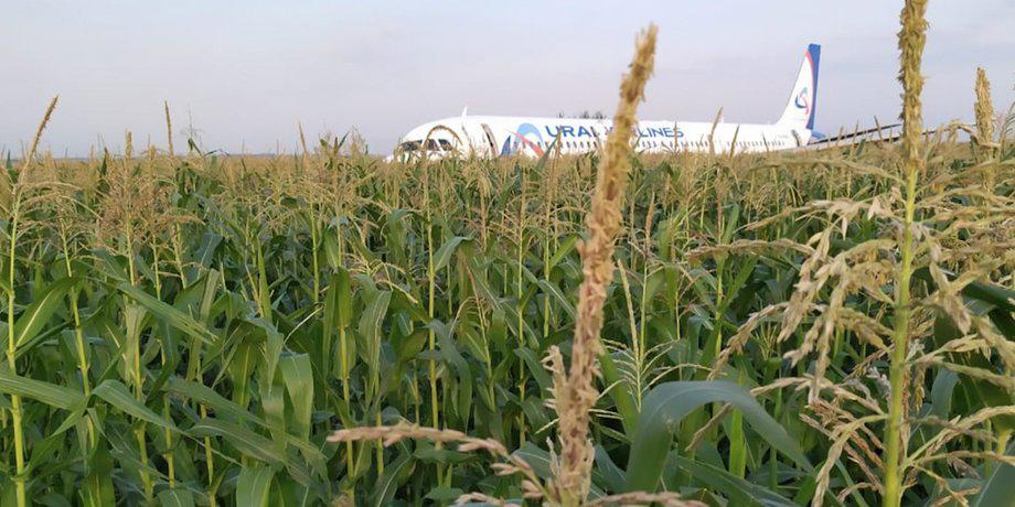 Чудо на кукурузном поле в Подмосковье. Подробности счастливого спасения пассажиров рейса Симферополь – Москва