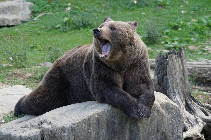 В Хабаровском крае медведь украл покойника