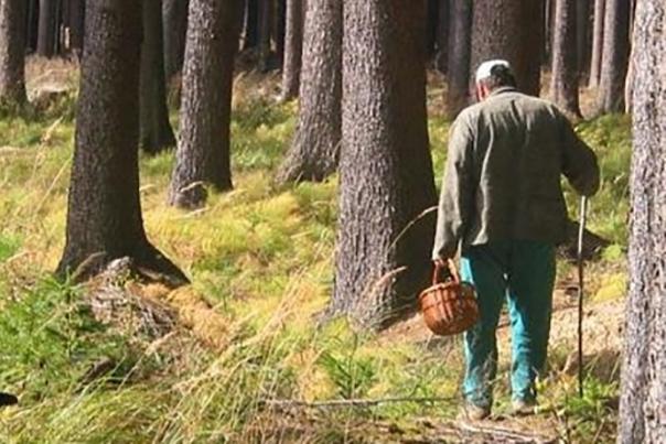 Под Могилевом мужчина пошел за грибами и заблудился