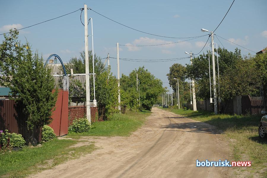 Жители деревни под Бобруйском жалуются на стаю бродячих собак