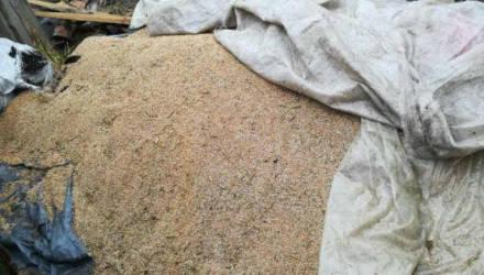 В Белыничском районе работник хозяйства украл почти две тонны пшеницы