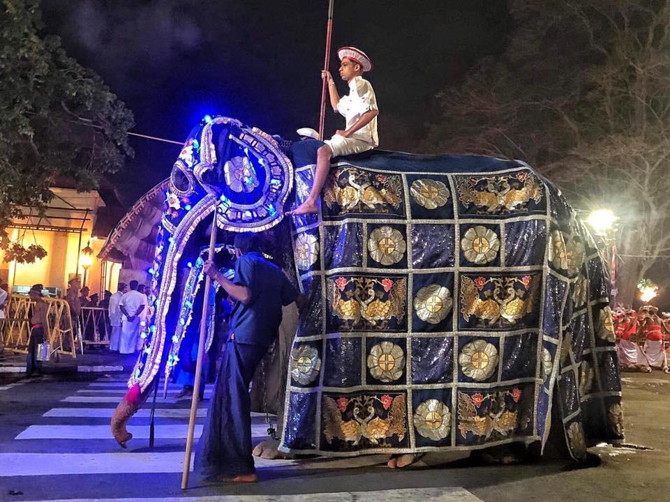 Волонтёры сняли жуткие фото, что скрывает костюм слонихи, участвующей в параде