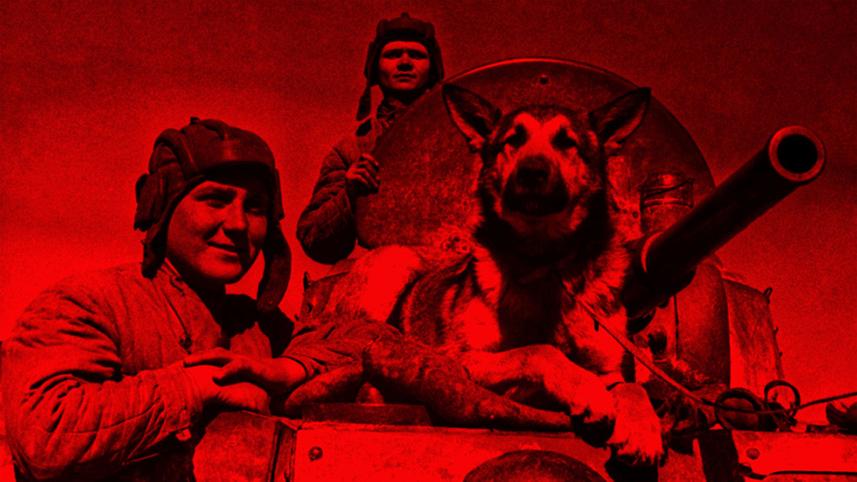 Псы войны. Как собаки взрывали нацистов и спасали раненых