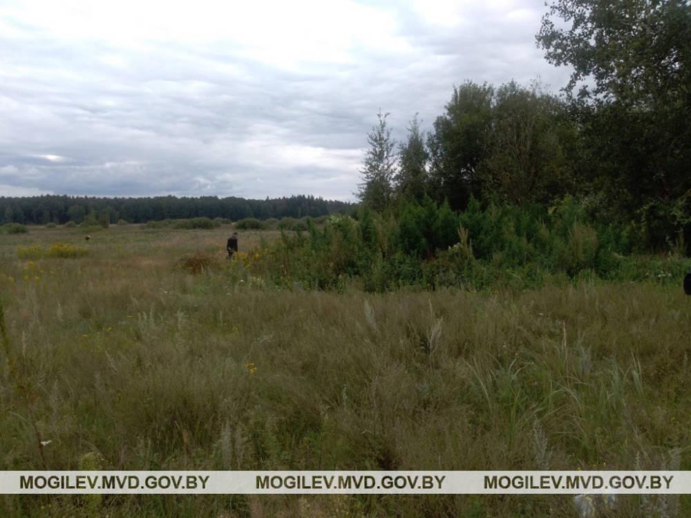 3,3 килограмма дикой конопли для двух парней из Бобруйска могут обернуться несколькими годами колонии