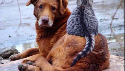 А у Вас большое сердце? В Могилеве пройдет акция в помощь бездомным животным
