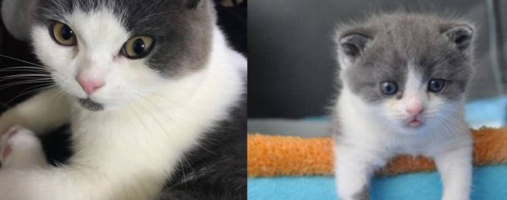 Новая услуга от китайской компании Sinogene – продажа клонированных котов. Во сколько обойдется покупателю такое удовольствие?