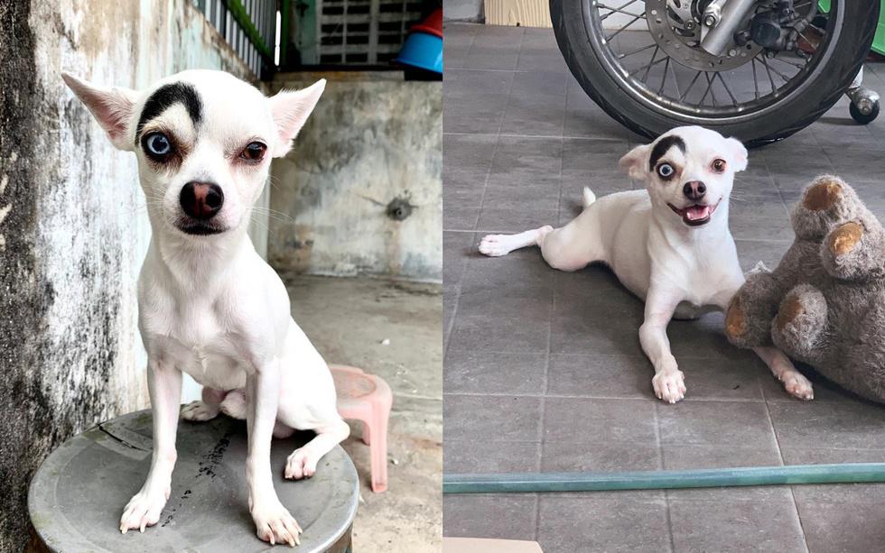 Пёс украл сердца пользователей со всего мира благодаря удивительной внешности