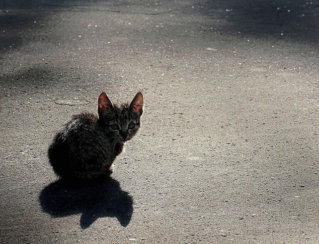 В Гомеле будут судить мужчину, который раздавил ногой котенка на глазах ребенка