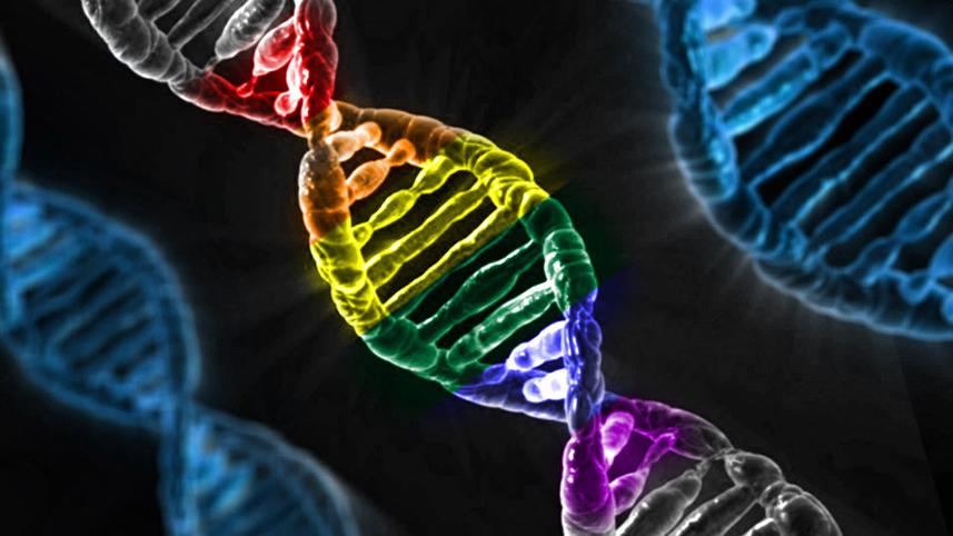 Геями не рождаются. Генетика лишь на 25% определяет ориентацию