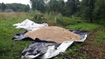 В Горецком районе мужчина подозревается в приобретении заведомо похищенного зерна