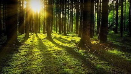 Запрещено посещать леса в трёх районах Могилёвской области