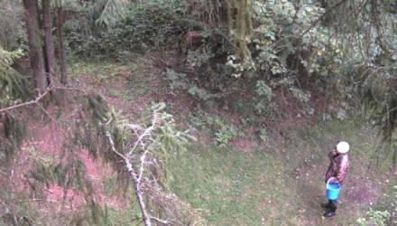 Фотоловушки продолжают выявлять нарушителей в лесах Могилёвской области