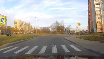 Забавные кадры: в Могилёве заметили голубя-пешехода, соблюдающего ПДД