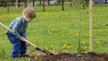 Засаживать деревьями промзону будут в Могиёеве 12 октября. Приглашают помочь всех желающих