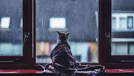 Переменная облачность и дожди. Погода на неделю в Могилёве
