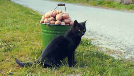 «Бульба» не по карману. В Беларуси могут взлететь цены на картошку