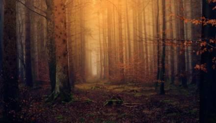 Вторые сутки не могут найти грибников, пропавших в Могилёвской области