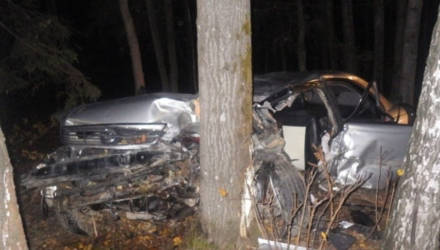 В Могилёвском районе авто сбило лося. Водитель госпитализирован