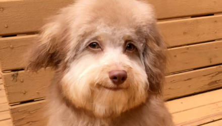 Пёс с очень выразительной мордой удивляет Интернет