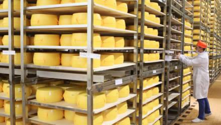 Сыры под единым брендом начнут производить в Славгородском, Чериковском и Краснопольском районах