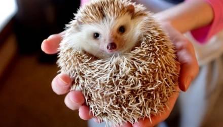 Удивительный мир круглых животных. Некоторые - очень опасные
