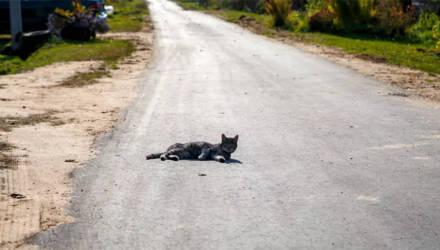 """""""После того, как в этом месте застрял чиновник, дорогу заасфальтировали"""". Жители Горок ждали этого 5 лет"""