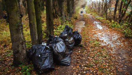 На пикник и уборку мусора зовут могилевчан в Печерский лесопарк