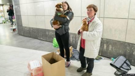Могилевчанка уже три года раздает бездомных животных. Вот как реагируют прохожие (видео)