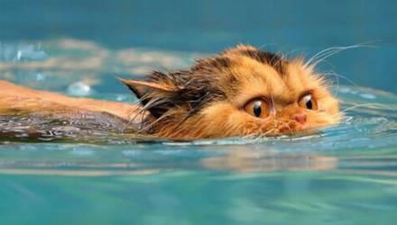 «Как вода? Нормально!» Кот разговаривает с хозяйкой, пока она его моет