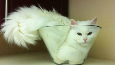 Ещё несколько фотодоказательств того, что кошки — это жидкость