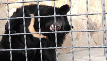 """Директор зоопарков в Крыму намерен уничтожить 30 """"лишних"""" медведей"""