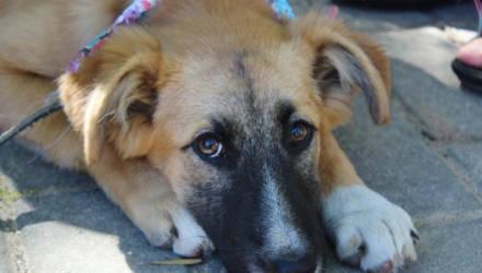 Социальная акция в помощь бездомным животным проходит в Могилёве