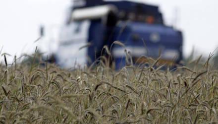 В Могилёвской области 13 районов, неблагоприятных для сельхозпроизводства