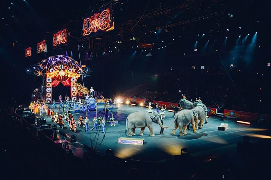 В Беларуси потребовали запретить цирки с животными