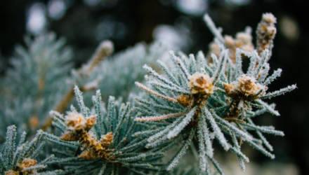 Морозец и солнце — ненадолго. Погода в Могилёве в выходные