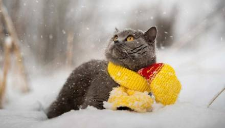 Зима не зима: погода на неделю в Могилёве