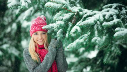 Могилёвские лесхозы призывают сохранить новогодние деревья