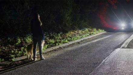 Инициатива об освобождении водителя от ответственности при наезде на пешехода в некоторых случаях. Что думает ГАИ?