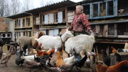 Краснопольская семья променяла квартиру на личное подсобное хозяйство