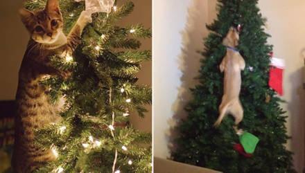 """""""Стенка на стенку"""": коты и собаки против новогодних ёлок"""