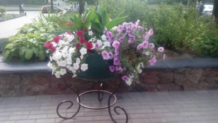 Миллион цветов высадят весной на могилёвские клумбы