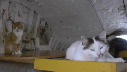 «Сейчас их около 70». Репортаж о котах, которые живут в Эрмитаже