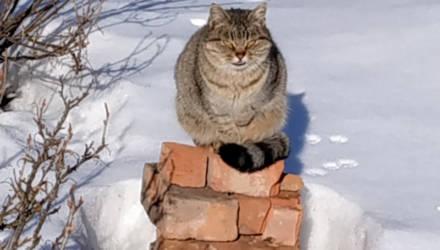 Единая электронная база домашних животных появилась у коммунальщиков Могилёва