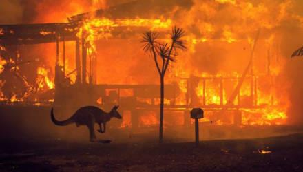 40 страшных фото из охваченной огнем Австралии